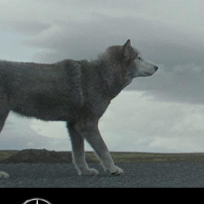 Mercedes-Benz CLA Wolf